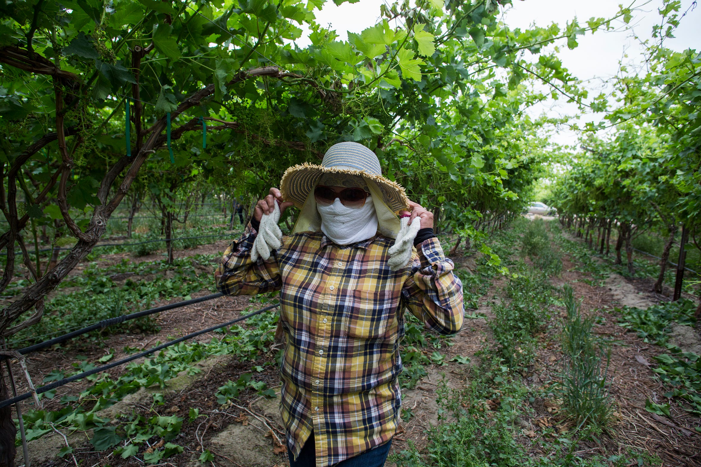 Field supervisor Enriqueta Magaña has worked in the Coachella Valley's grape vineyards for two decades and at the Coachella festival for 10 years.