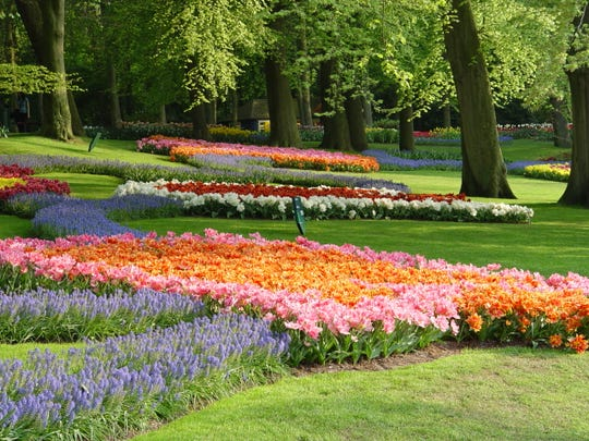 The predictable range of tulip colors, shapes and sizes makes for beautifully massed effects on a large scale.