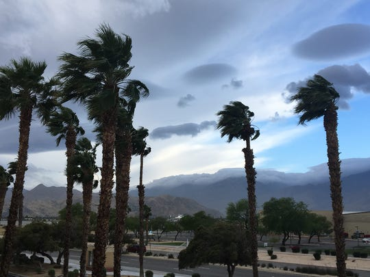 Trees sway in the wind in Palm Springs.