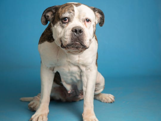 Lily will be available on Monday, April 22 at Noon at the Arizona Humane Society's Campus for Compassion location at 1521 W. Dobbins Road in Phoenix