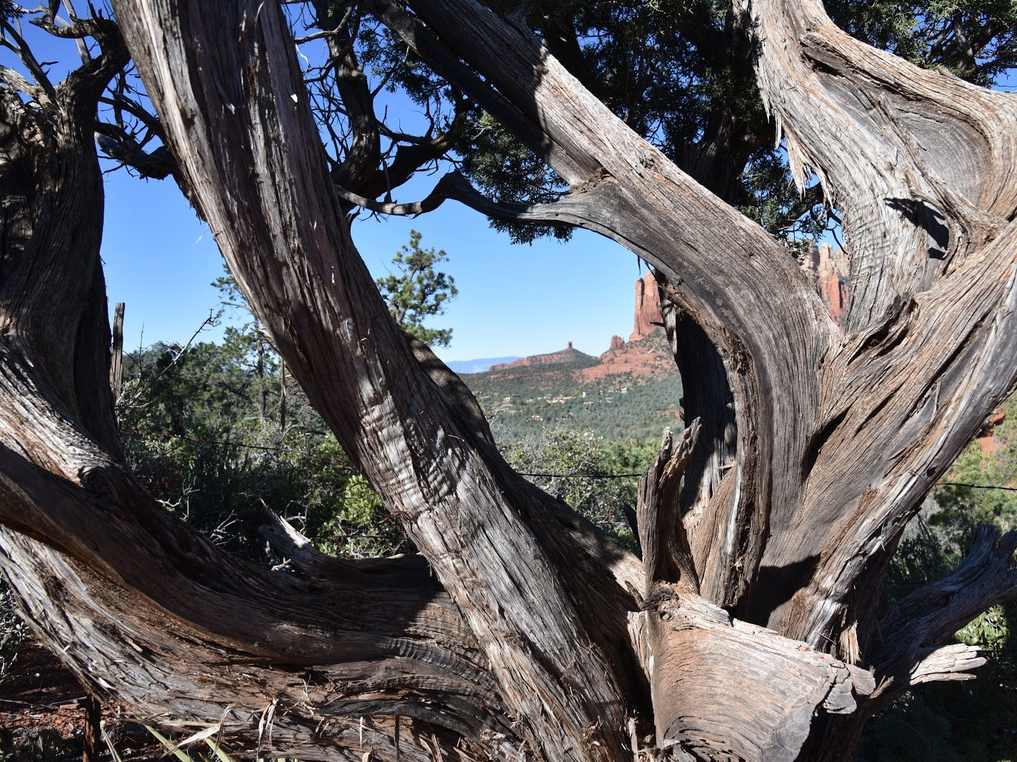 A juniper-framed view on Cibola Pass Trail.