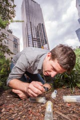 Clint Penick, an assistant research professor in the Biomimicry Center at Arizona State University, has been studying  ants for 15 years.