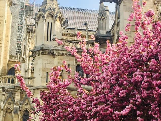 Notre Dame in bloom, this week