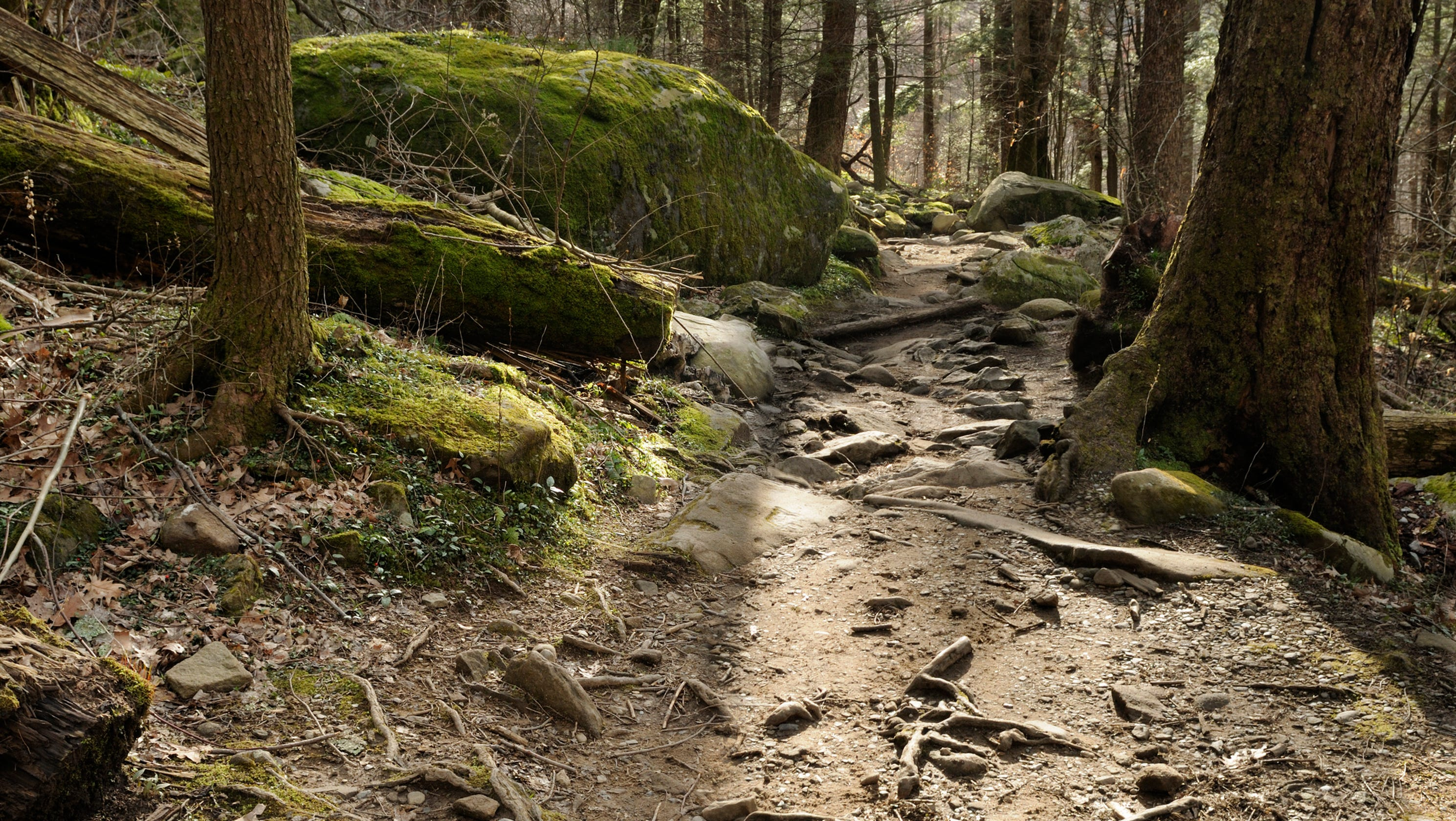 Knoxville paramedic dies while hiking in the Smoky Mountains