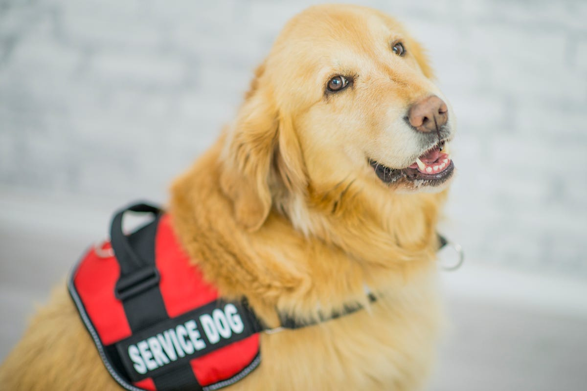 Disabled student says airlines stranded her and service dog