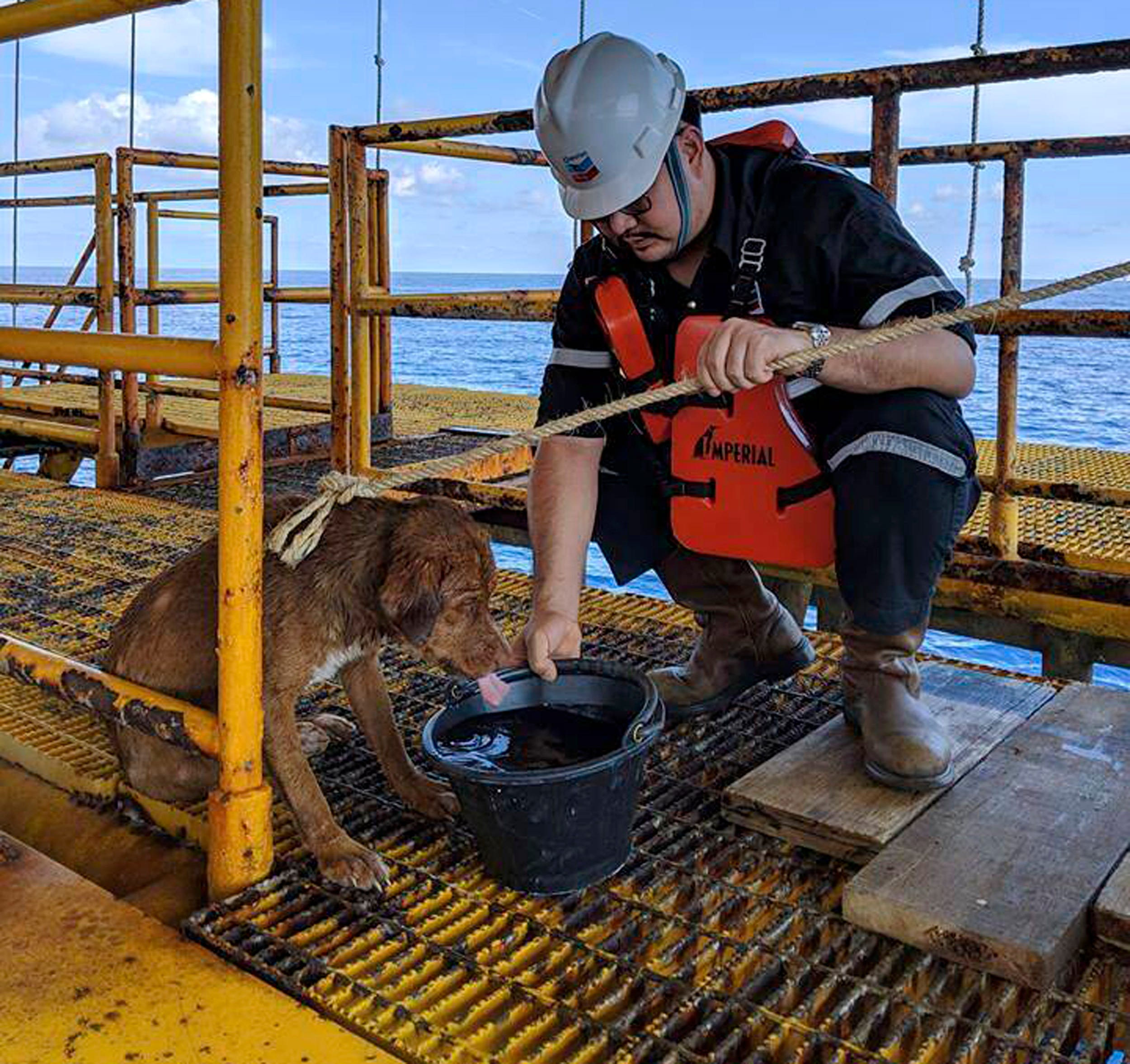 """] A dog found swimming more than 135 miles from the shore of an oil rig crew in the Gulf of Thailand has been safely restored to the ground. """"A dog found swimming more than 135 miles from the shore of an oil tank crew in the Gulf of Thailand was"""" Width = """"540"""" data-mycapture-src = """""""" data-mycapture-sm-src ="""
