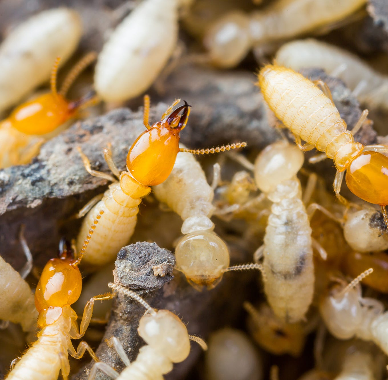 How to Prevent Termites From Damaging Your Home