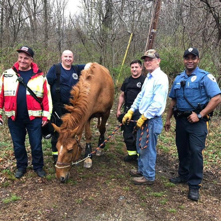 Police and firefighters free a trapped horse in Rockaway Twp.