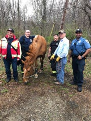 First responders help a horse get back on its feet after falling on a trail in Rockaway Township on April 14.