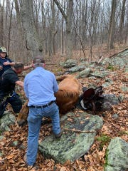 A fallen horse waits as firefighters and police figure out how to help in the Wildcat Ridge Wildlife Management Area.
