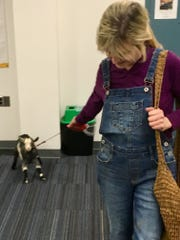 Three-week-old goat Miss Kissie doesn't seem to like being on a leash -- she plants her hooves and leans back as goat farmer and former Nashville broadcaster Karlin Evans pulls in the Tennessean newsroom