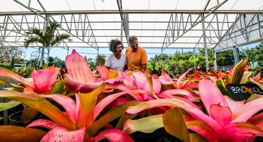 Nancy Rubino and her husband Guy, look for some plants for their Naples home. This is their third trip to the nursery over the past few weeks. Golden Gate Nursery, a family owned and operated business running in Naples for more than 30 years. The Nursery was small at the beginning. Thursday, April 11, 2019.
