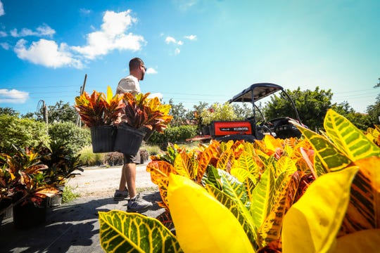 Golden Gate Nursery, a family owned and operated business running in Naples for more than 30 years. The Nursery was small at the beginning. Thursday, April 11, 2019. J.J. Hernandez Jr., loads up some plants.
