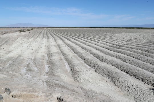 Shallow trenches plowed into exposed playa help cut down on airborne dust as the Salton Sea recedes away from the Elmore Farm near Brawley, April 11, 2019.
