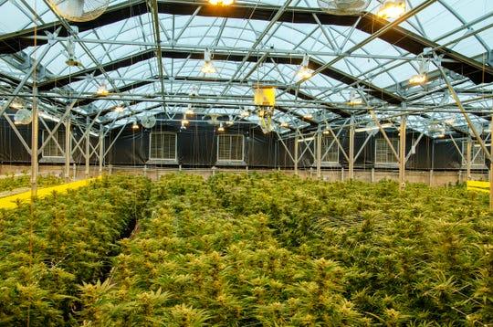 A marijuana farm in Santa Cruz County is requesting a buffer for new hemp farms to prevent cross pollination.