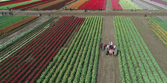 Tulip Fest: Enjoy acres of colorful tulips, dozens of activities and shop from vendors at this annual spring festival.