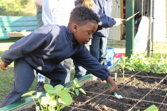 Student Fredick Watson digs a hole in the soil to plant squash in the Tallahassee School of Math Science garden.