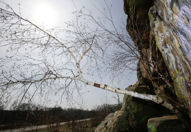 A tree grows out of the face of Ship Rock on Tuesday, April 16, 2019, along Highway 21 in Adams County, Wis. The tree was part of a study of cliffside trees, which are among the oldest and slowest-growing organisms in the world.