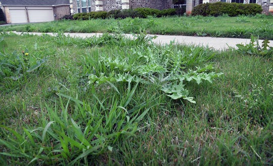 Left unchecked, the average lawn can develop a wide variety of weeds.