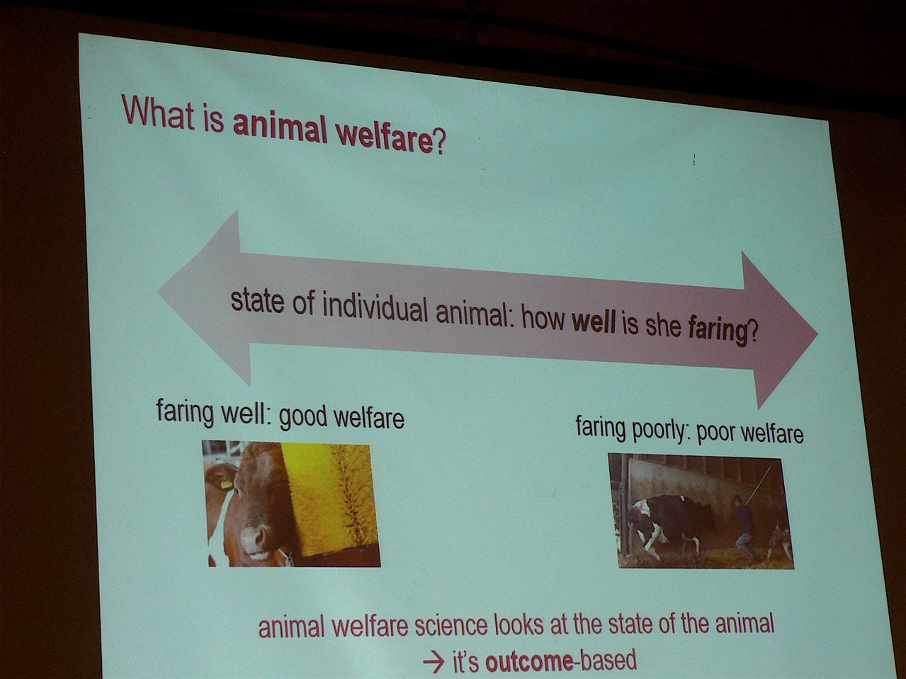 Animal welfare means many things and is often seen in the wrong way.