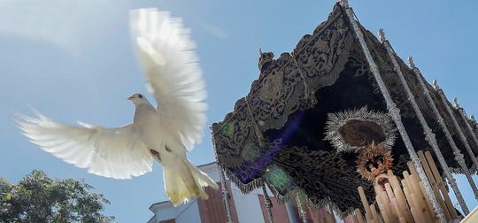 A dove is part of Easter festivities in Seville, Spain, on Holy Tuesday, April 16, 2019.