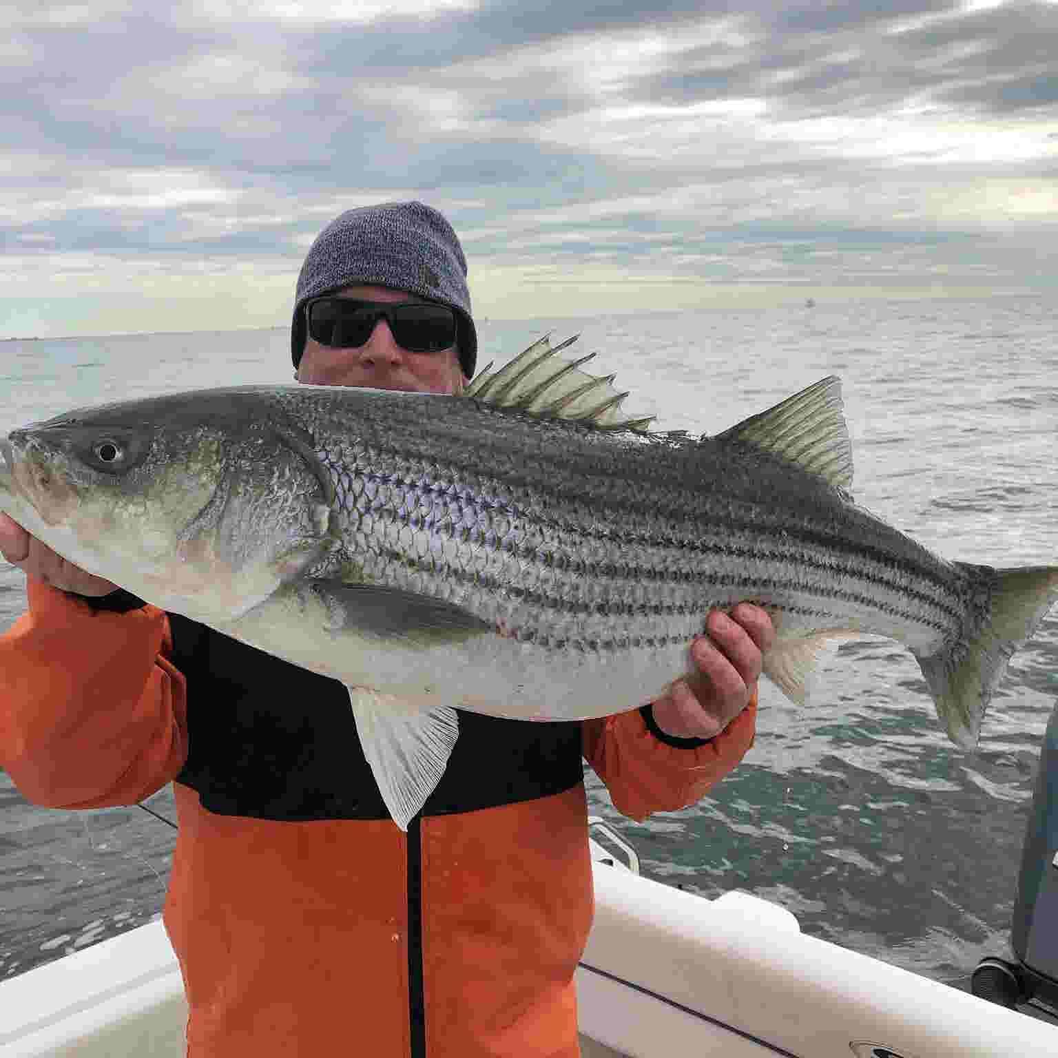 NJ spring 2019 striped bass run