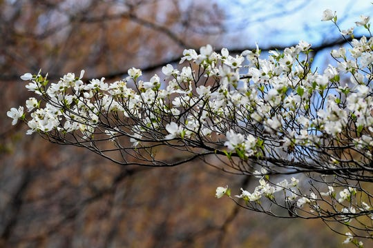 Spring scenes along the Blue Ridge Parkway April 18, 2019.