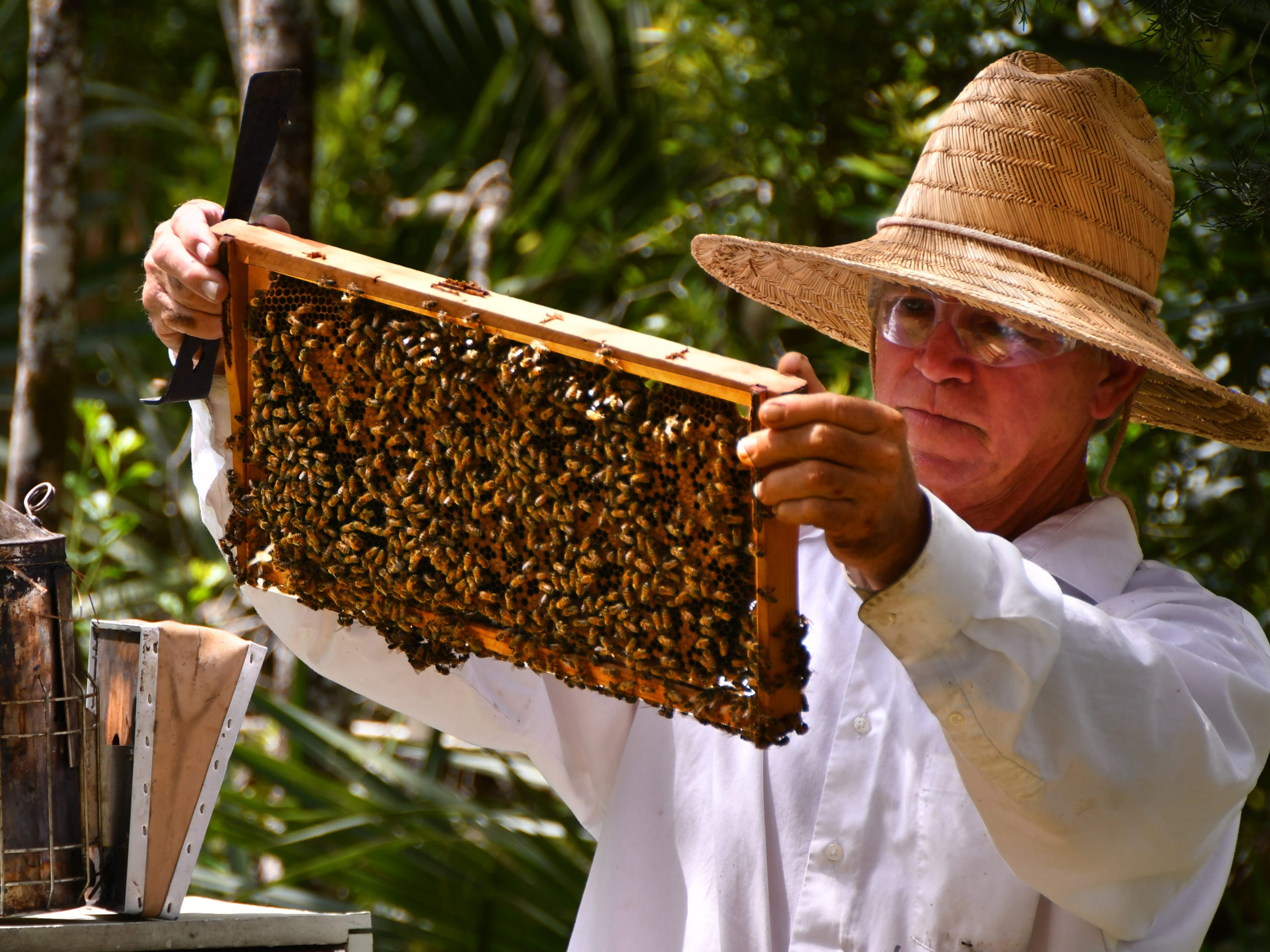 Bee crisis: Pollinators endure countless threats in Florida. And we need them to live