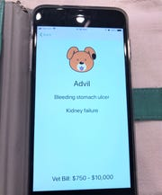 """The """"Bad Human, No!"""" app, created by Elmira veterinarian Mari Delaney, offers pet owners quick information about what human food and medications are safe for pets or toxic."""