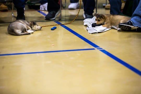 Seven-week-old mutts Norman, left, and Bixby lay down on the floor during an Oakdale Community Choir practice on Tuesday, April 16, 2019, at Oakdale Prison in Coralville, Iowa.