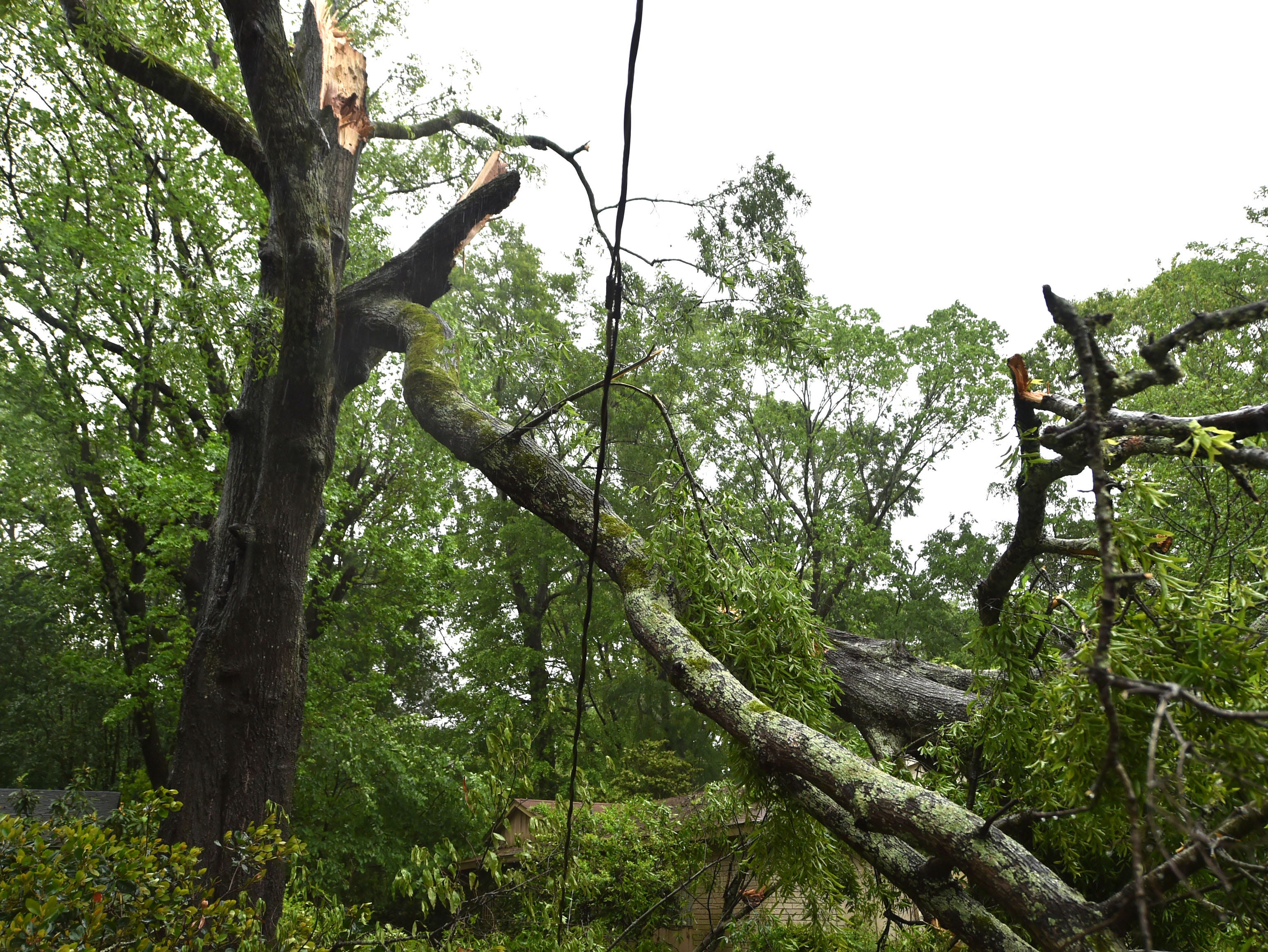 A tree fell on power lines and a yard on Reddoch Drive in Jackson.