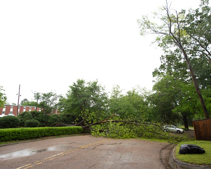 A tree fell on the Belhaven University Campus fell across Greymont Ave. just north of Pinehurst Blvd. in Belhaven.