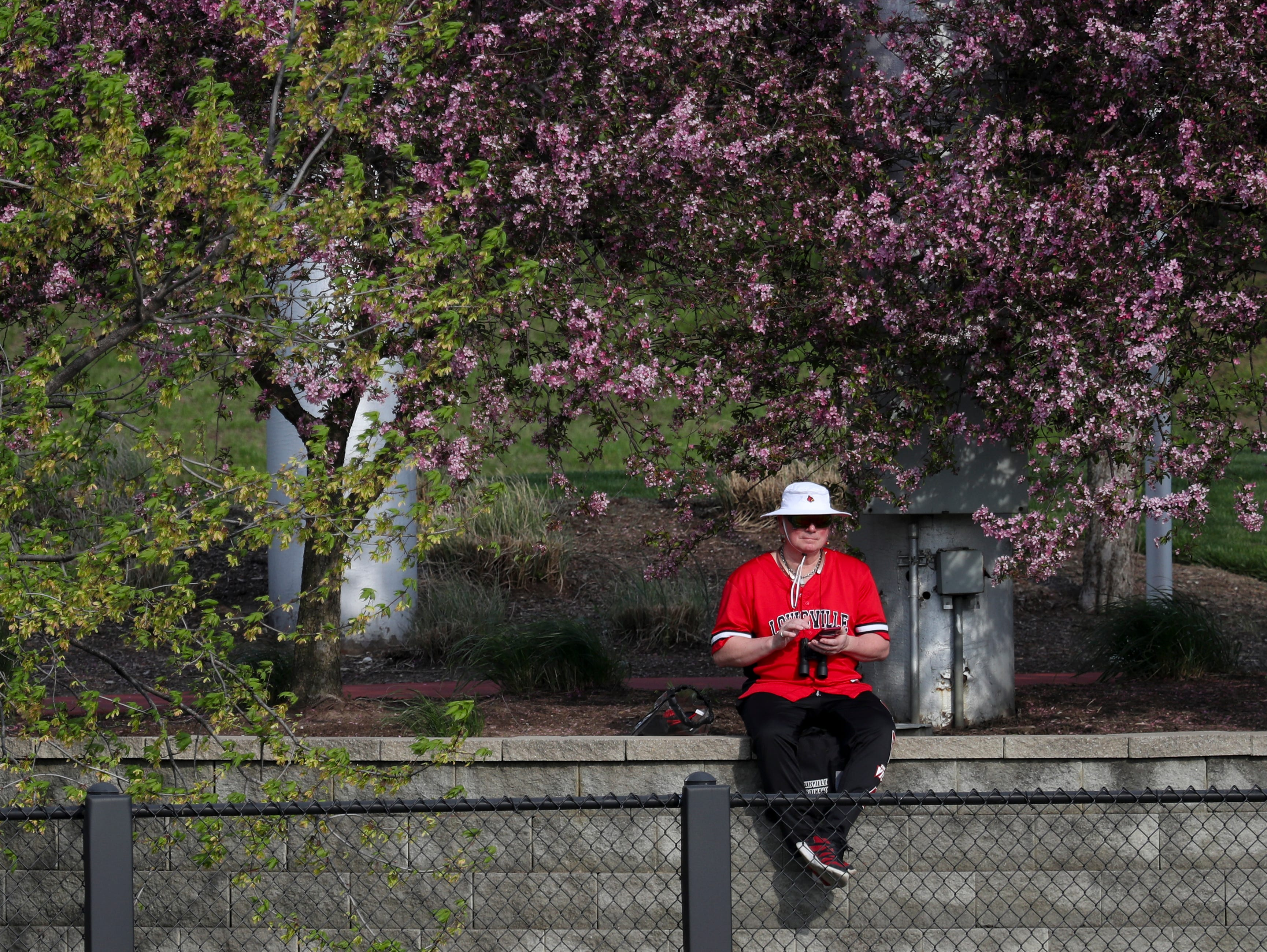 Louisville fans watch the Cards battle Kentucky on April 17.