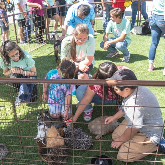 Children play with chickens, goats, geese, bunnies and turtles at a petting zoo.