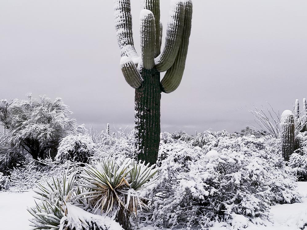 February weather east side of Pinnacle Peak, Scottsdale.