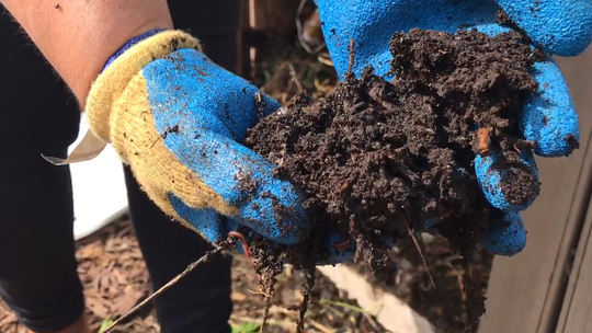 Compost is rich in nutrients. April 18, 2019.
