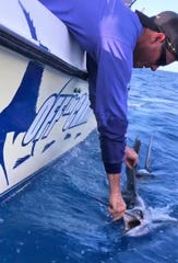 Capt. Scott Fawcett of Off the Chain Fishing Charters in Stuart releases a sailfish earlier in the week while fishing offshore.