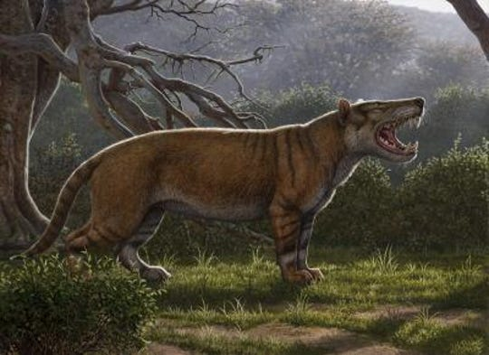 Simbakubwa kutokaafrika, a massive carnivore, was identified from fossils that had been stored away in a drawer at the National Museums of Kenya for years.