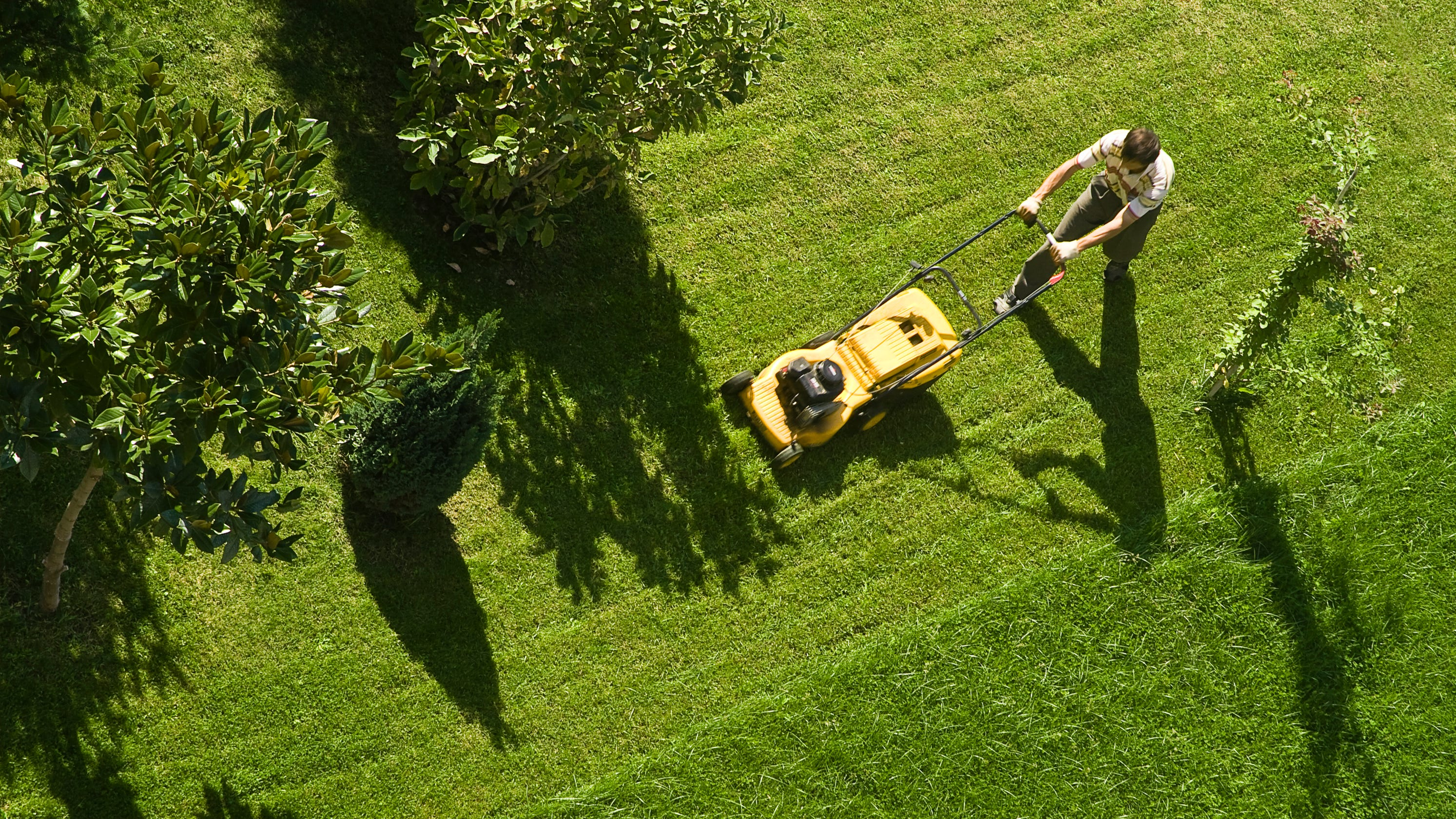 mowing the lawn: don't rake grass clippings or mow in same