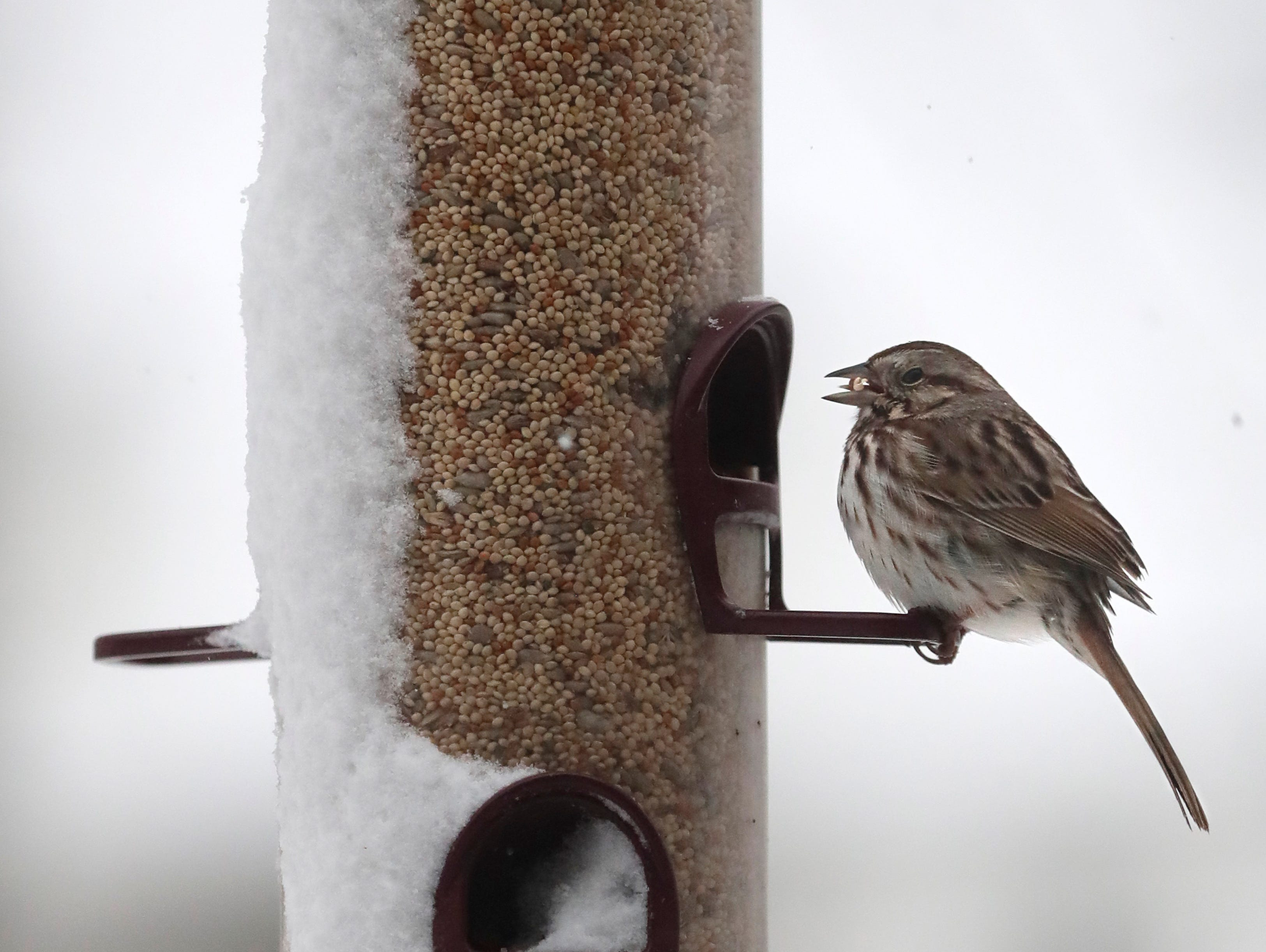 A bird eats from a snow covered bird feeder during a spring snow storm Thursday, April 11, 2019, in Appleton, Wis. Dan Powers/USA TODAY NETWORK-Wisconsin