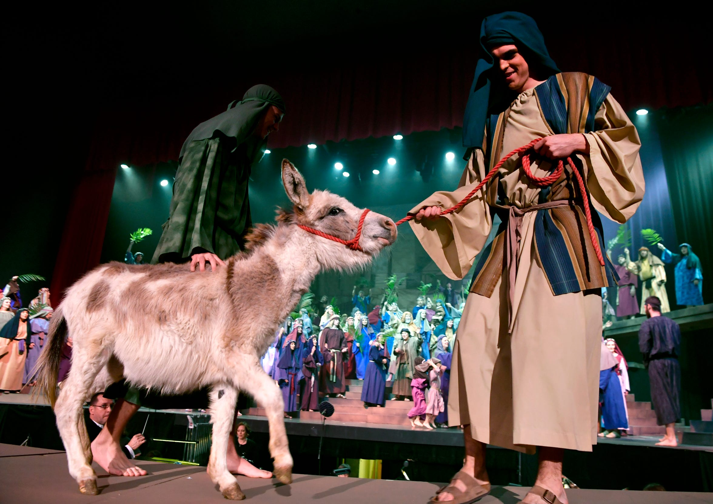 """A donkey is led onstage during rehearsal for the Pioneer Drive Baptist Church Easter pageant, """"Jesus: His Story"""" April 12, 2019. Held at the Abilene Convention Center, the production concludes Saturday."""