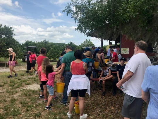 Deer Park Farms draws crowds of peach-lovers on weekends.
