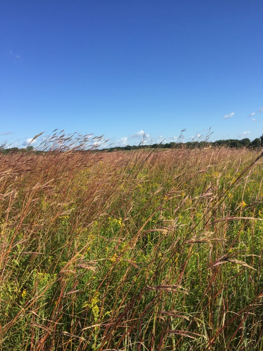 Restored grassland resulting from a partnership between National Wild Turkey Federation and Michigan Department of Natural Resources.