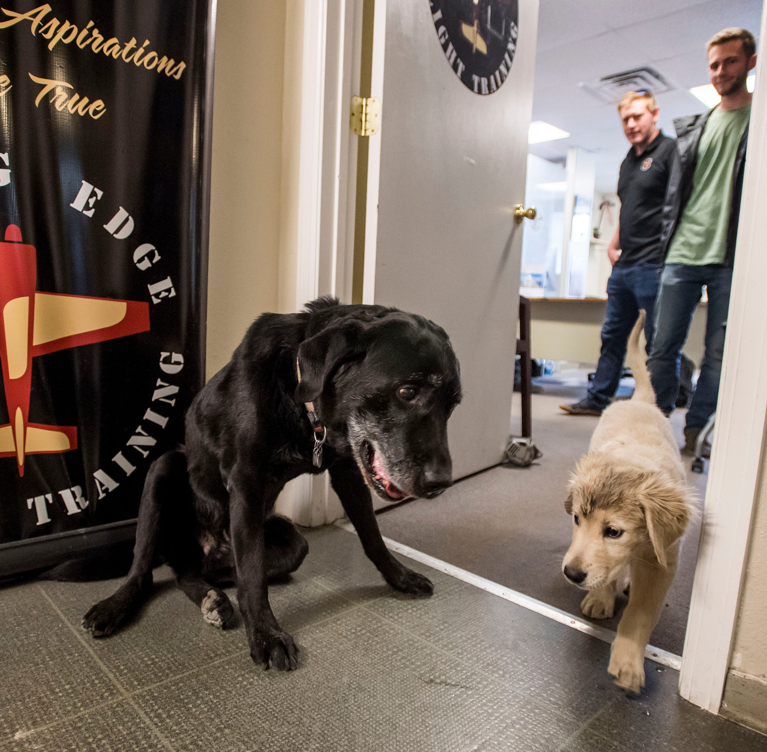 Meet Duke and Dwight, Loveland's flight school hangar dogs