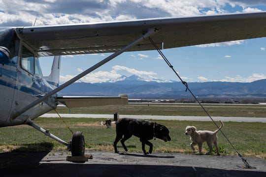 Hangar dogs Duke, 15, and Dwight, 3 months, walk under the wing of one of the Cessna planes outside the main hangar on Thursday, April 18, 2019, at the Leading Edge Flight Training in Loveland, Colo.