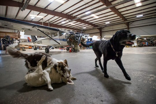 Hangar dogs Duke, a 15-year-old lab; Dwight, a 3-month-old golden retriever; and Aria, a 6-month-old border collie, play in The New Firewall Forward hangar that shares a building with the Leading Edge Flight Training school on Thursday, April 18, 2019, in Loveland, Colo.