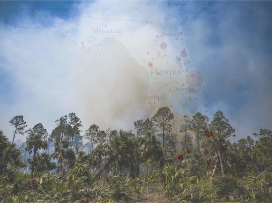 Hundreds of large fires burn Florida land each year.