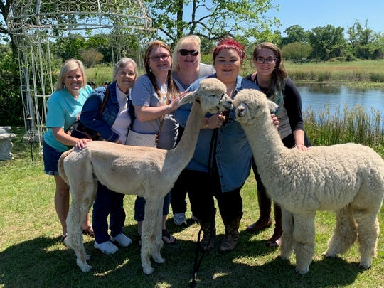 A family surprised Salina Garcia (center, holding alpaca leashes) with a trip to Peach Creek Vineyards' wine and alpaca event with Bluebonnet Hills Alpaca Ranch April 14. It was for Garcia's 29th birthday, and relatives came from Baton Rouge to College Station, Texas, for the surprise.