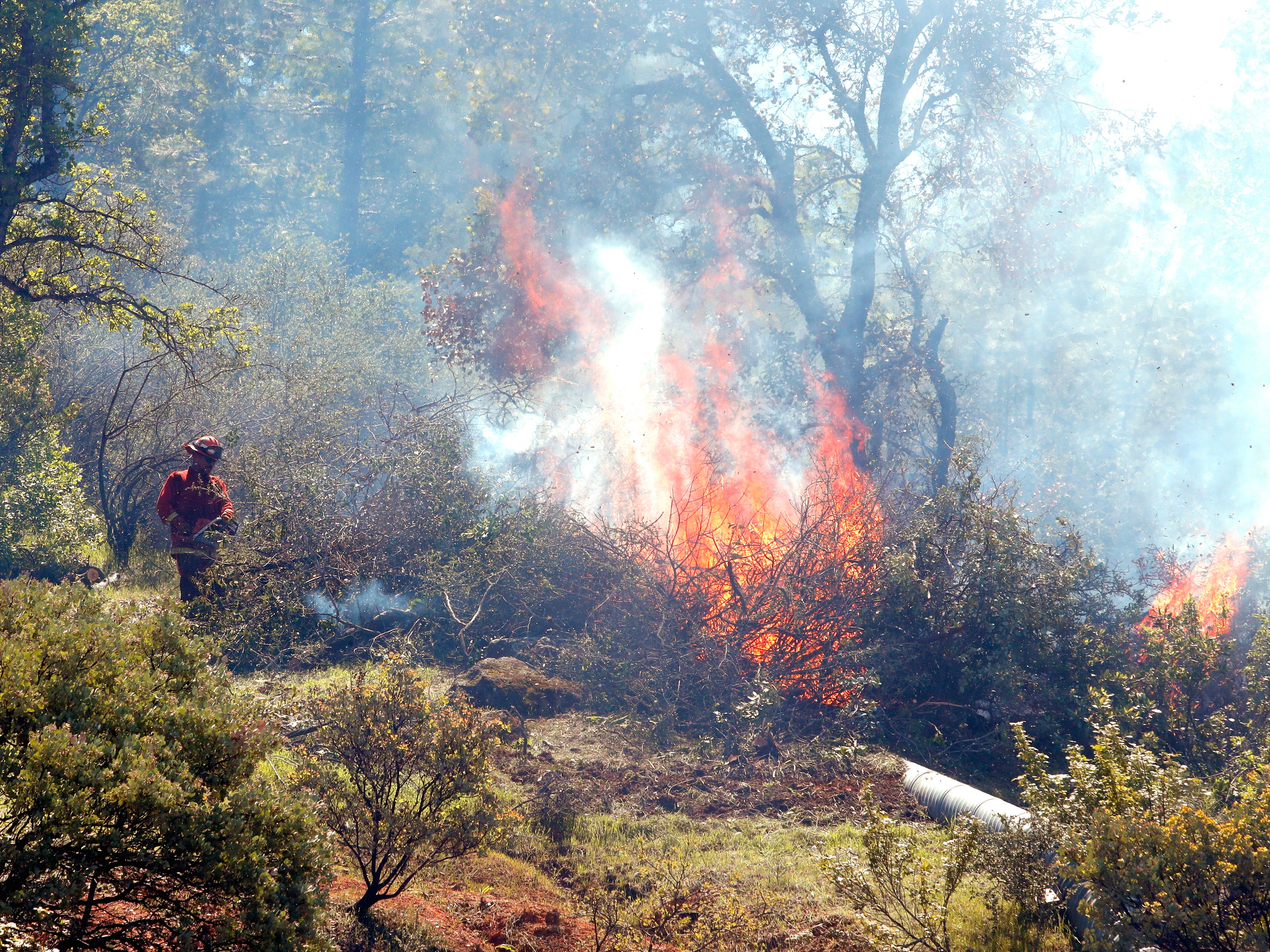 A crew from the Sugar Pine Conservation Camp burns brush on a hillside above Eureka Way as part of a fuel-reduction project in west Redding on Thursday, April 18, 2019.