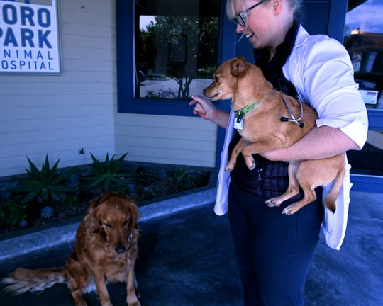 Dr. Lindsey Rockwood tells her dog, Holly, to sit, while holding her other dog, Chippy outside Toro Park Animal Hospital. April 19, 2019.